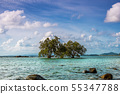 Blue sea and blue sky and tree in the sea summer 55347788