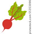 Beet Root Vegetable Isolated. Vector Harvest Crop 55353096