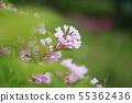 초여름의 꽃 댕강 목 55362436