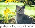 Cat with flowers 55372041