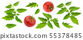 Tomato leaves isolated on white background with clipping path 55378485