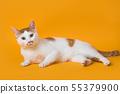 누워서 정면을 바라보는 고양이 55379900