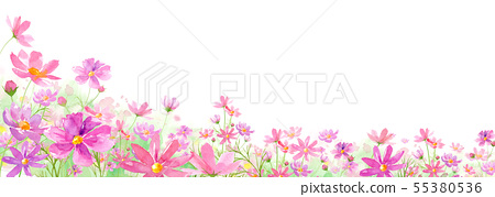 Background full bloom cosmos field watercolor illustration asymmetry 55380536