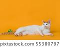 엎드려서 쳐다보는 고양이 55380797