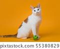 앉아서 정면을 바라보는 고양이 55380829