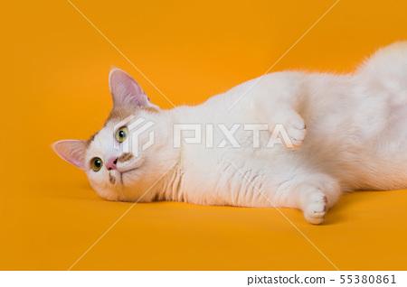 누워서 쳐다보는 고양이 55380861