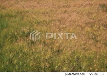 경주,황금보리밭,분황사 55381097