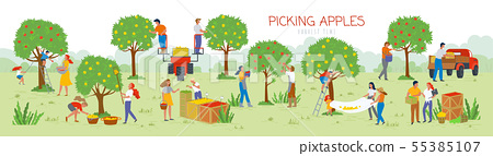 Picking Apples Harvesting Time, People in Garden 55385107