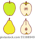 Isolated vector flat apple and pear 55388949