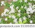 코쿠찌나시 꽃 55395050