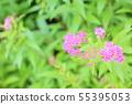 시모 쯔케 소우의 꽃 55395053