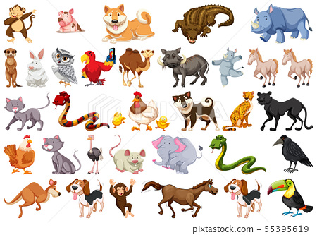 Diverse set of isolated animals on white 55395619
