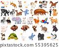 Set of different animals 55395625