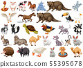 Diverse set of isolated animals on white 55395678