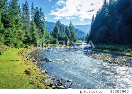 mountain river winding through forest 55395949