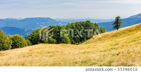panorama of a grassy alpine meadow in august 55396018