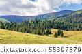 森林 树林 山峰 55397879