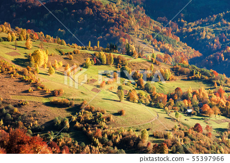 beautiful autumn scenery of a countryside 55397966