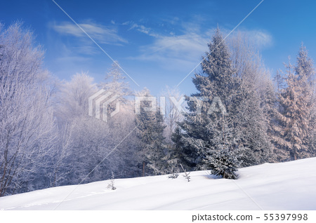 forest in hoarfrost on a snow covered meadow 55397998
