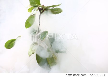 Green leaves of tree in smoke forest 55399204