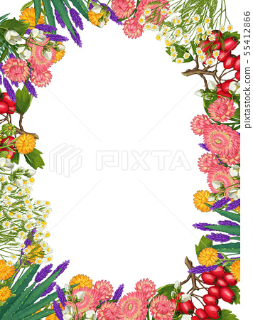 Hand drawn medicinal plant frame. Healing herbs border. isolated on white background 55412866