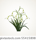 Snowdrops on a white  background. Spring vector 55415898
