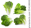 fresh chinese cabbage on a white background 55418600