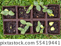 small plant shoots for the garden 55419441