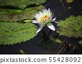 莲花,花,红百合,睡莲,Ara莲花,植物,风景,花田 55428092