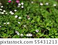 蜜蜂 55431213