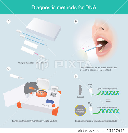Diagnostic methods for DNA 55437945