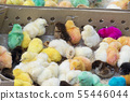 Group of multiple baby chicks brought for sale at 55446044