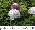 """ฟ้าทะลายโจร """"ดอกไม้ Noorarei 55455299"""