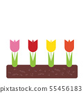 Spring flowerbed with colorful tulips and green 55456183