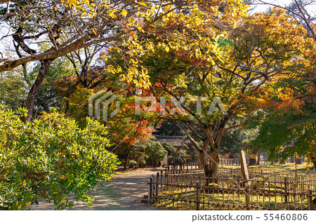 Autumn leaves in front of the entrance to the park 55460806