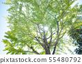 夏天樹陽光綠色熱的夏日 55480792