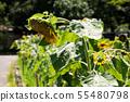 Sunflower flower summer yellow flower summer flower yellow flower 55480798