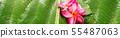 Banner pink frangipani green tropical palm leaf 55487063