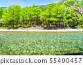 長野長野縣清初的Kamikoda和Yodogawa的淡水和新鮮綠葉 55490457