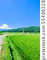 여름 농촌 풍경 55496228