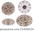 Set-Sea urchin shell isolated on white background 55499434