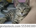 고양이 일상 55500389