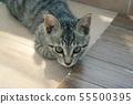 고양이 일상 55500395