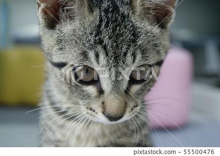 고양이 일상 55500476