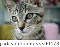 고양이 일상 55500478