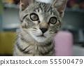 고양이 일상 55500479