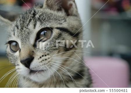 고양이 일상 55500481