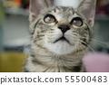 고양이 일상 55500483