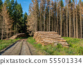 Piled logs of harvested wood in forest 55501334
