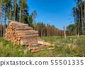 ท่อนซุง,ป่า,ต้นไม้ 55501335